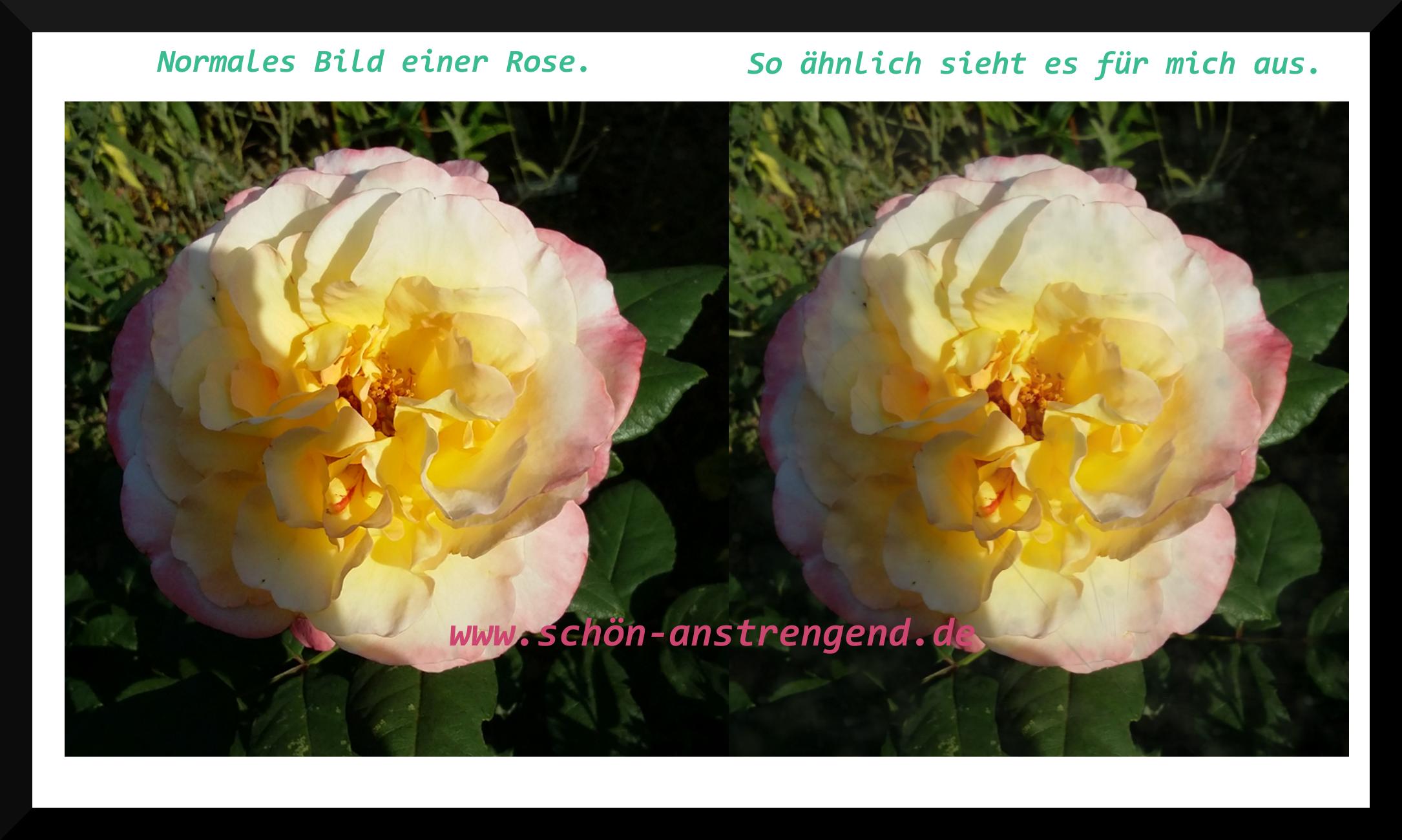 rose_22jahrems